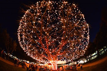Santa's Village Pecan Tree Lighted