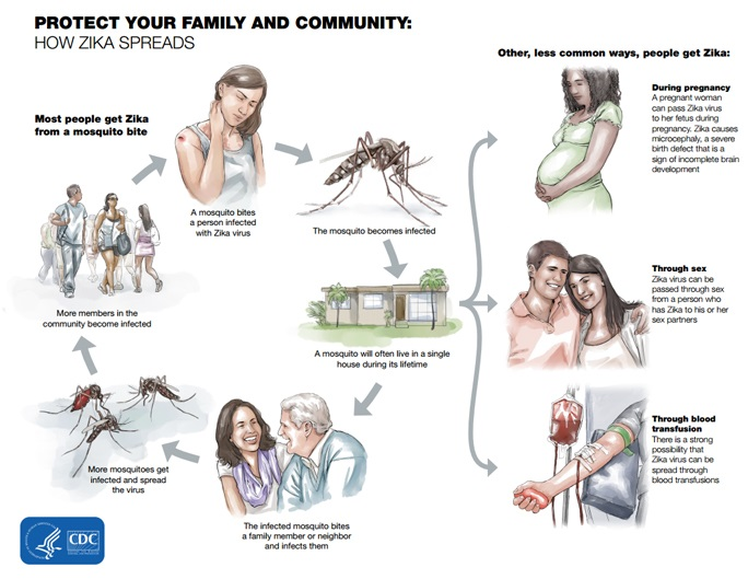 Infographic showing additional information about the Zika virus. All information is provided in other areas on this web page.