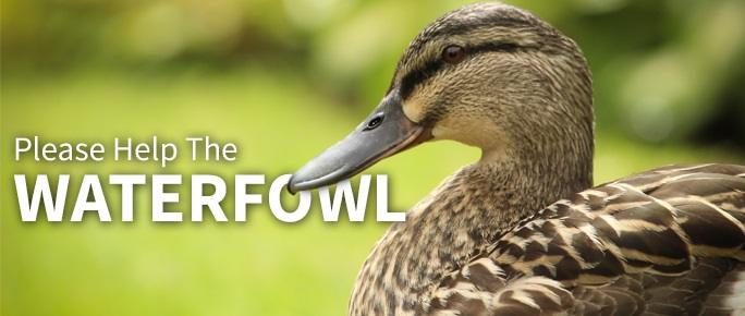Please help the Waterfowl