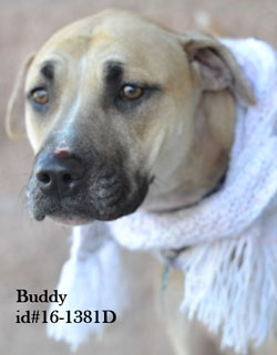 Buddy Pet of the Week