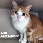Dan Pet of the Week