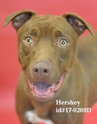 Hershey Pet of the Week
