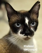 Kahleesi Pet of the Week