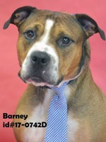 Barney Pet of Week Sept 29