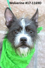 Wolverine Pet of the Week Oct 27