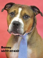 Barney Pet of Week Nov 3