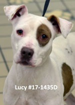 Lucy Pet of the Week