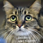 Snickers Pet of the Week