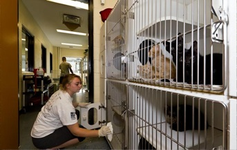Image of Community Service Cleaning cat cages