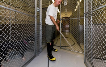 Image of staff Cleaning dog kennels