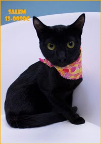 Salem Pet of the Week