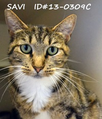 Savi Pet of the Week