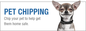 title graphic saying Pet Chipping