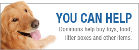 Title graphic saying You Can Help