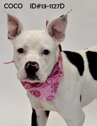 Co Co Pet of the Week Sept 13