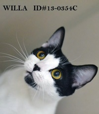Willa Pet of Week Oct. 4
