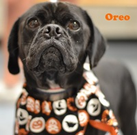 Oreo Pet of Week