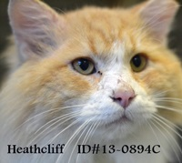 Heathcliff Pet of Week