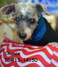 Chance Pet of Week