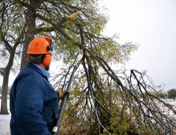 Tree Limb Trimming