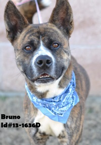 Bruno Pet of Week
