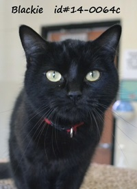 Blackie Pet of Week