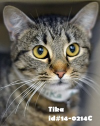 Tika Pet of Week