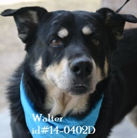 Walter Pet of Week