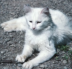 Picture of a feral cat