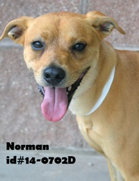 Norman Pet of Week