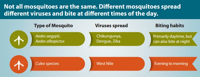The mosquito that spreads the Chikungunya, Dengue and Zika virus primarily bites during the daytime while the West Nile mosquito generally bites in the evening and morning
